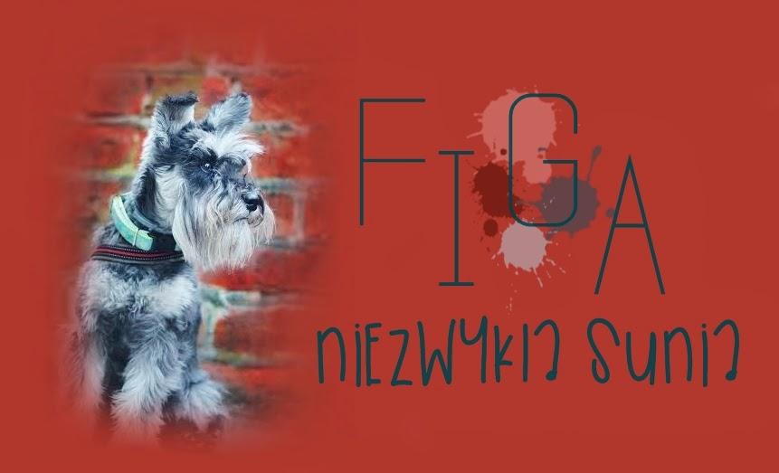 Figa - niezwykła sunia