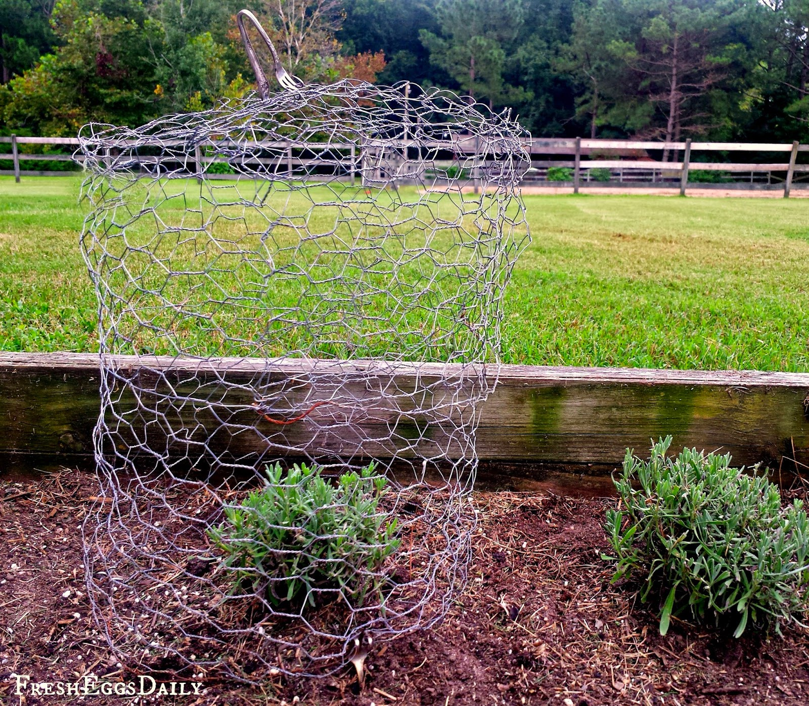 How to make a chicken wire garden cloche fresh eggs daily