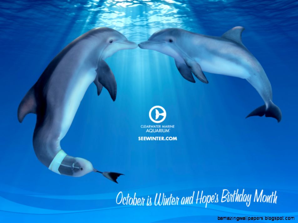 Wallpapers  Clearwater Marine Aquarium