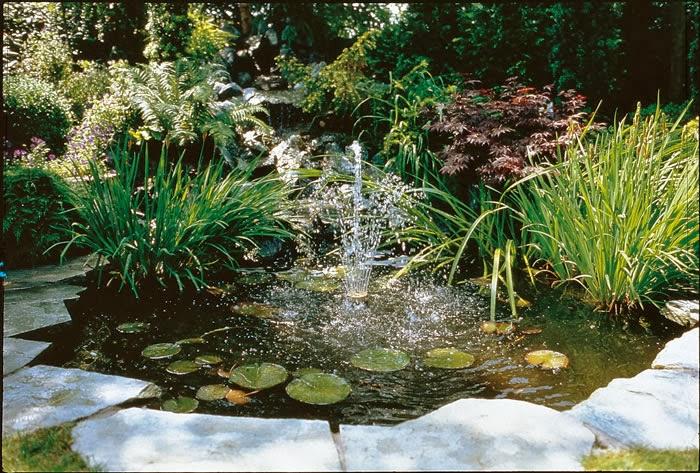 Arte y jardiner a problemas de las plantas acu ticas for Antas jardin