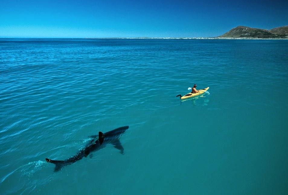 Shark and people Thomas Peschack