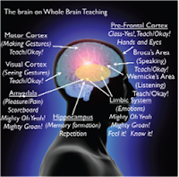 whole brain teaching, WBT, does whole brain teaching work, how does whole brain teaching affect the brain?