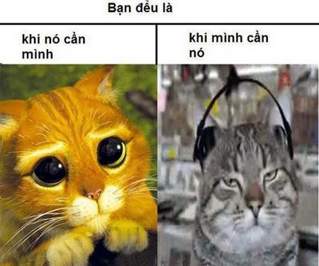 Hình chế vui về Mèo