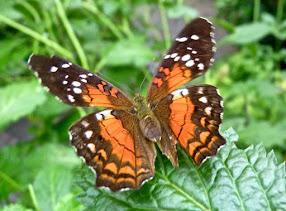 De poëzie is de vlinder op de bloem der wereld. Wolfgang Menzel