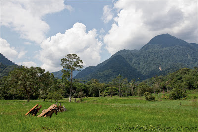 Common horses you know you want to drag kayaks into that valley, Chris Baer, Colombia, Rio, Putumayo