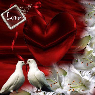 gambar lucu burung merpati love