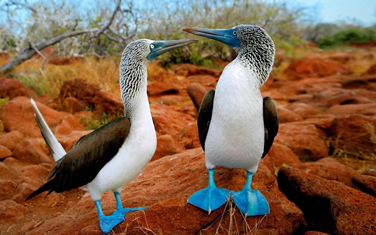 wow: birds paradise wallpapers, birds hd photos, widescreen desktop