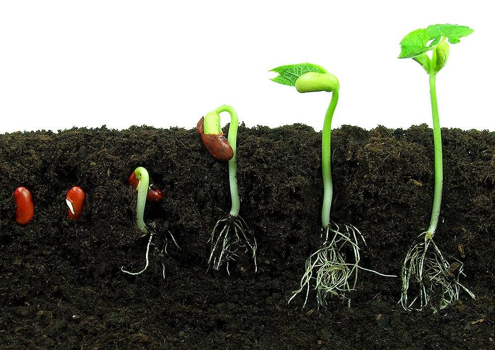 Kako dohraniti biljke?   Uredi ba�tu