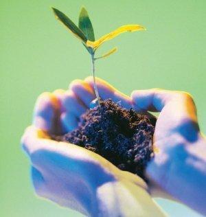biología, ecología, árbol, manos