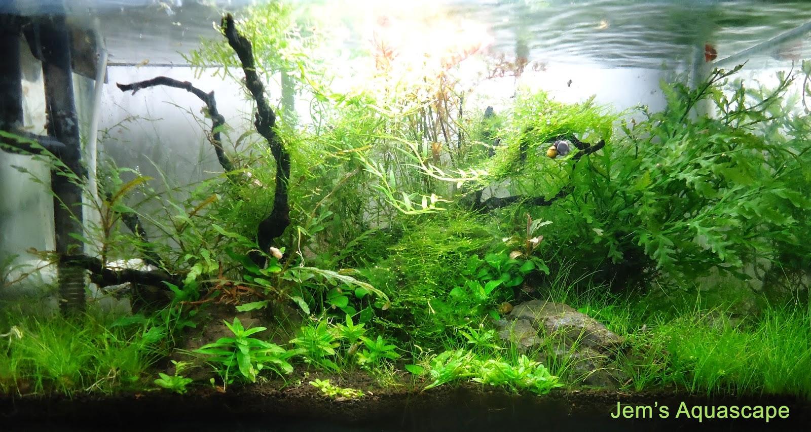 Jem 39 s aquascape jasa design dan maintenance aquascape - Gambar aquascape ...