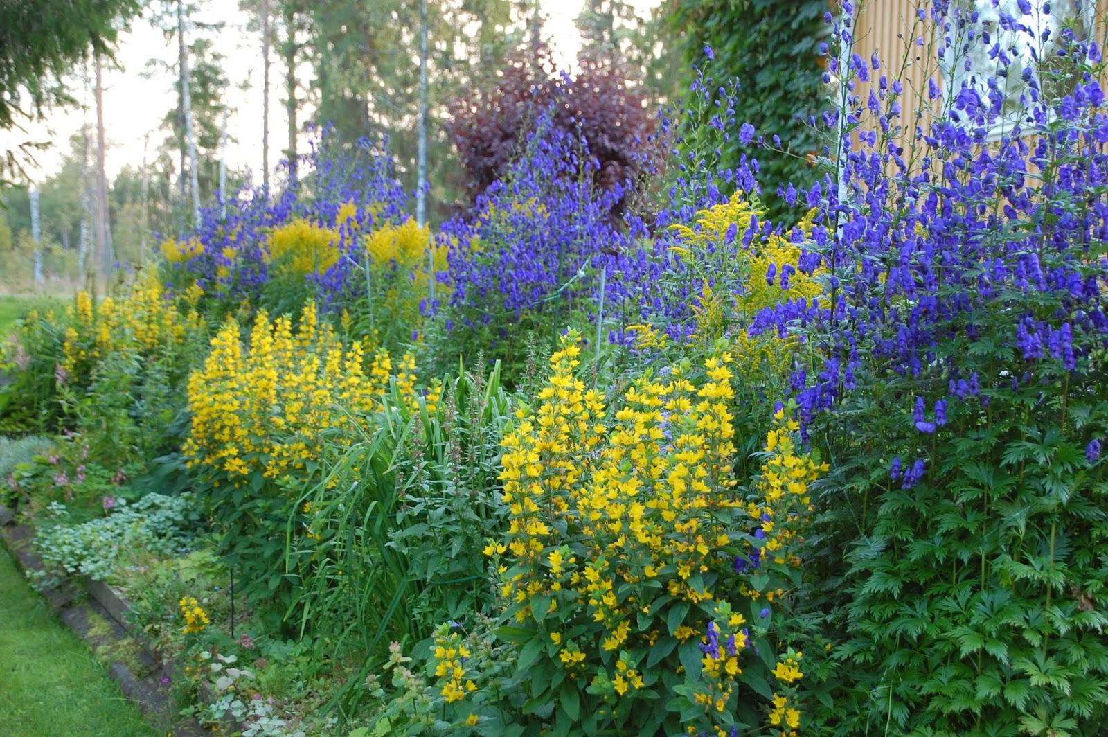 Svanå trädgård: Siris trädgård.