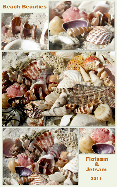photo of: shells on beach in collage style