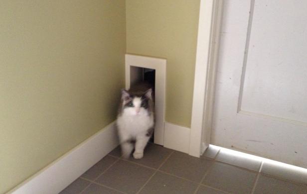 Stunning Exterior Cat Door Ideas - Interior Design Ideas ...