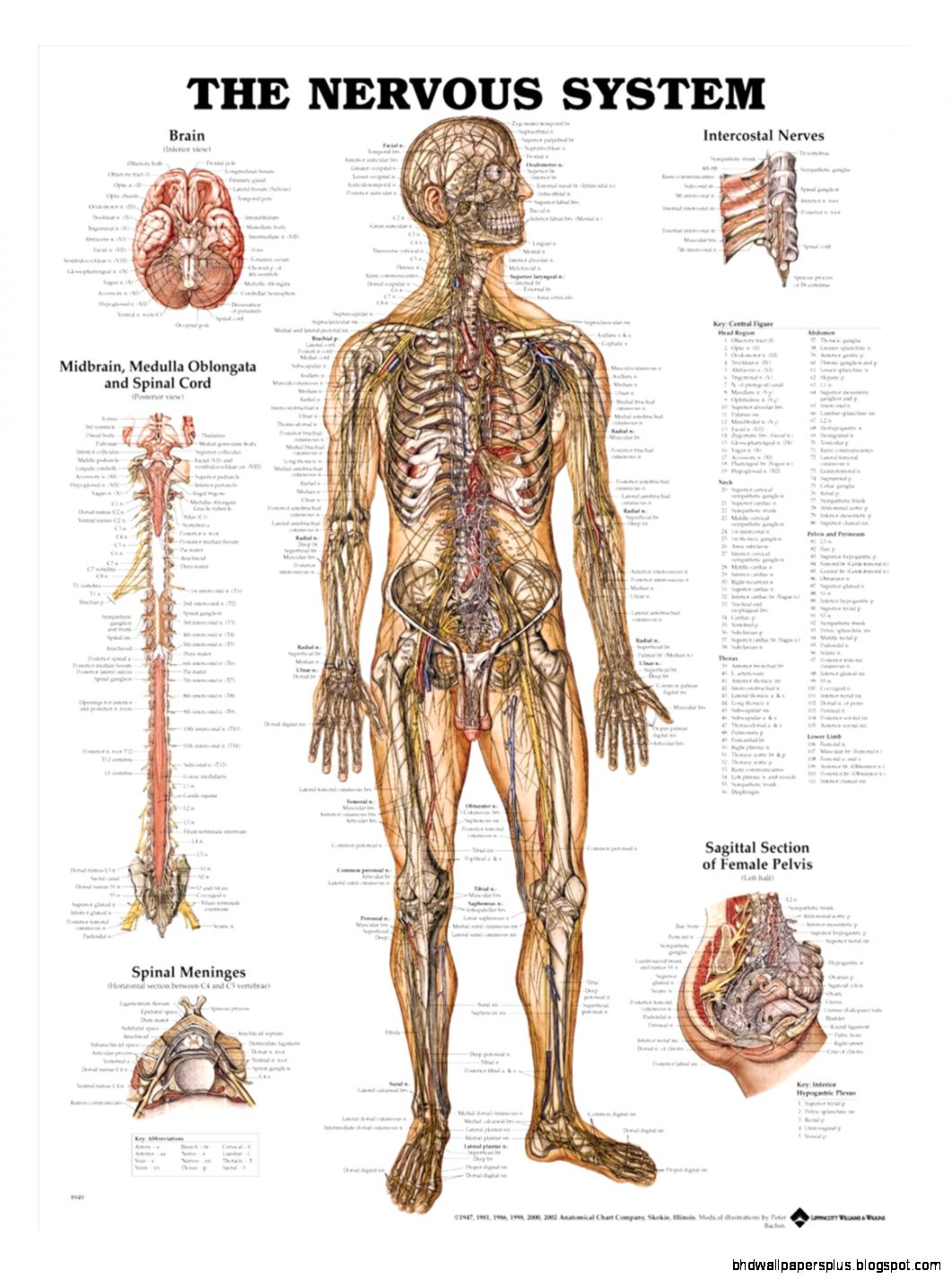 Anatomical Charts   Physiotherapy Charts  Posters Page 1