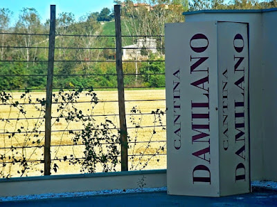 Cantina Damilano in Piedmont