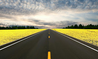 Long Road Yellow Field Green Trees HD Wallpaper