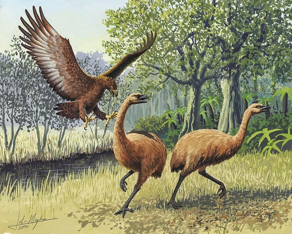 Elang Haasts Raksasa menyerang Moa Selandia Baru