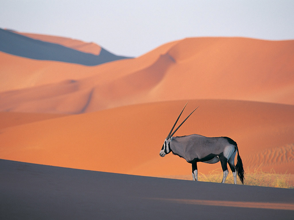http://3.bp.blogspot.com/-0q0MVTPpfNI/Ti6tB9rPm-I/AAAAAAAAIX0/WbHYTnRx9fg/s1600/Oryx+Antelope.jpg
