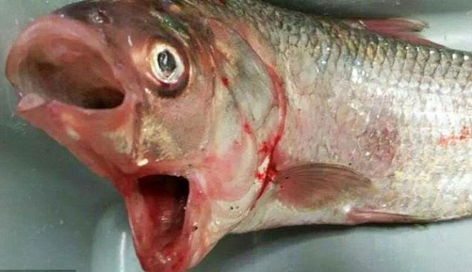 Serangkaian Ikan Langka Dan Aneh Telah Muncul Dari Laut Australia