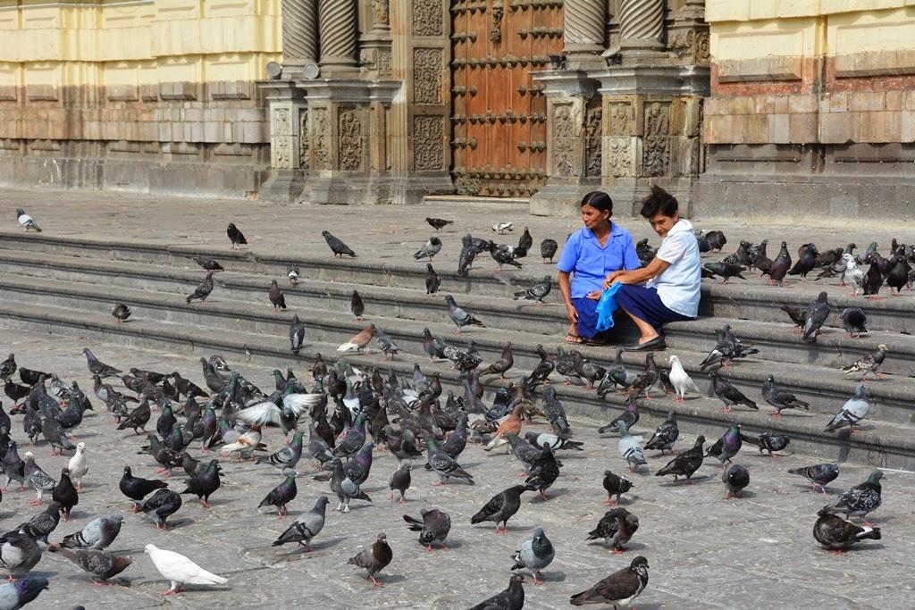 San Francisco Monastery Lima pigeons