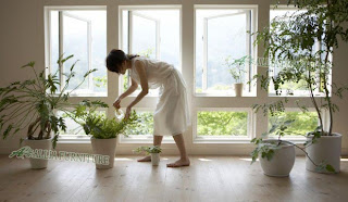 tanaman dalam rumah dengan menggunakan pot
