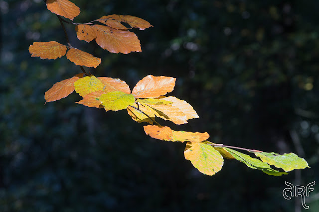 a branch of autumn colours