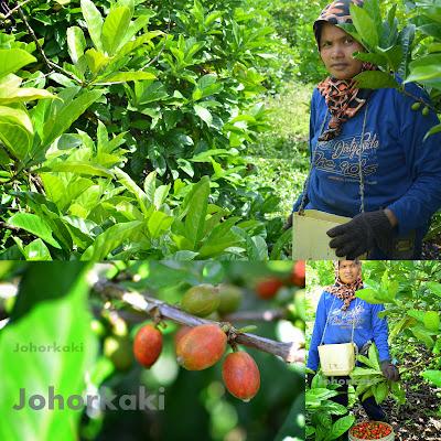 My-Liberica-Coffee-Taman-Molek-Johor-Bahru
