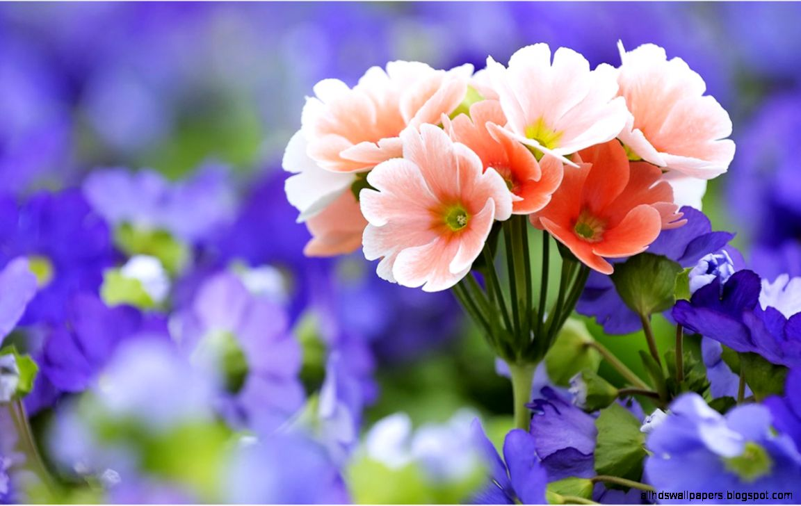 View Original Size Colorful Flower HD Desktop Wallpaper Widescreen High Image Source From This
