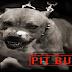 Agente de saúde é atacado por pit bull após vistoriar casa em Goiânia