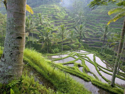 Ubud Pulau Bali