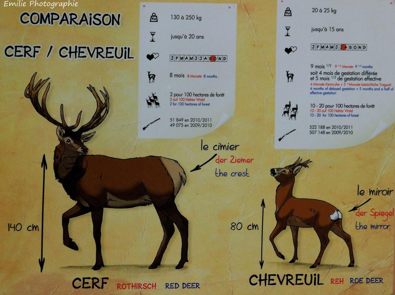 traduire site de rencontre en anglais Sainte-Geneviève-des-Bois