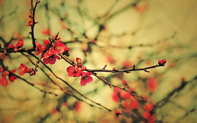 Lente bureaublad achtergrond met bloemen aan takjes