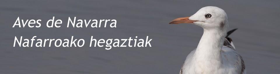 Aves de Navarra/Nafarroako hegaztiak