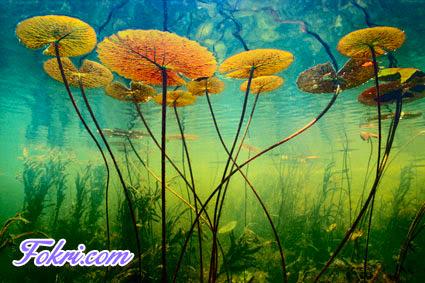 Under water Plants