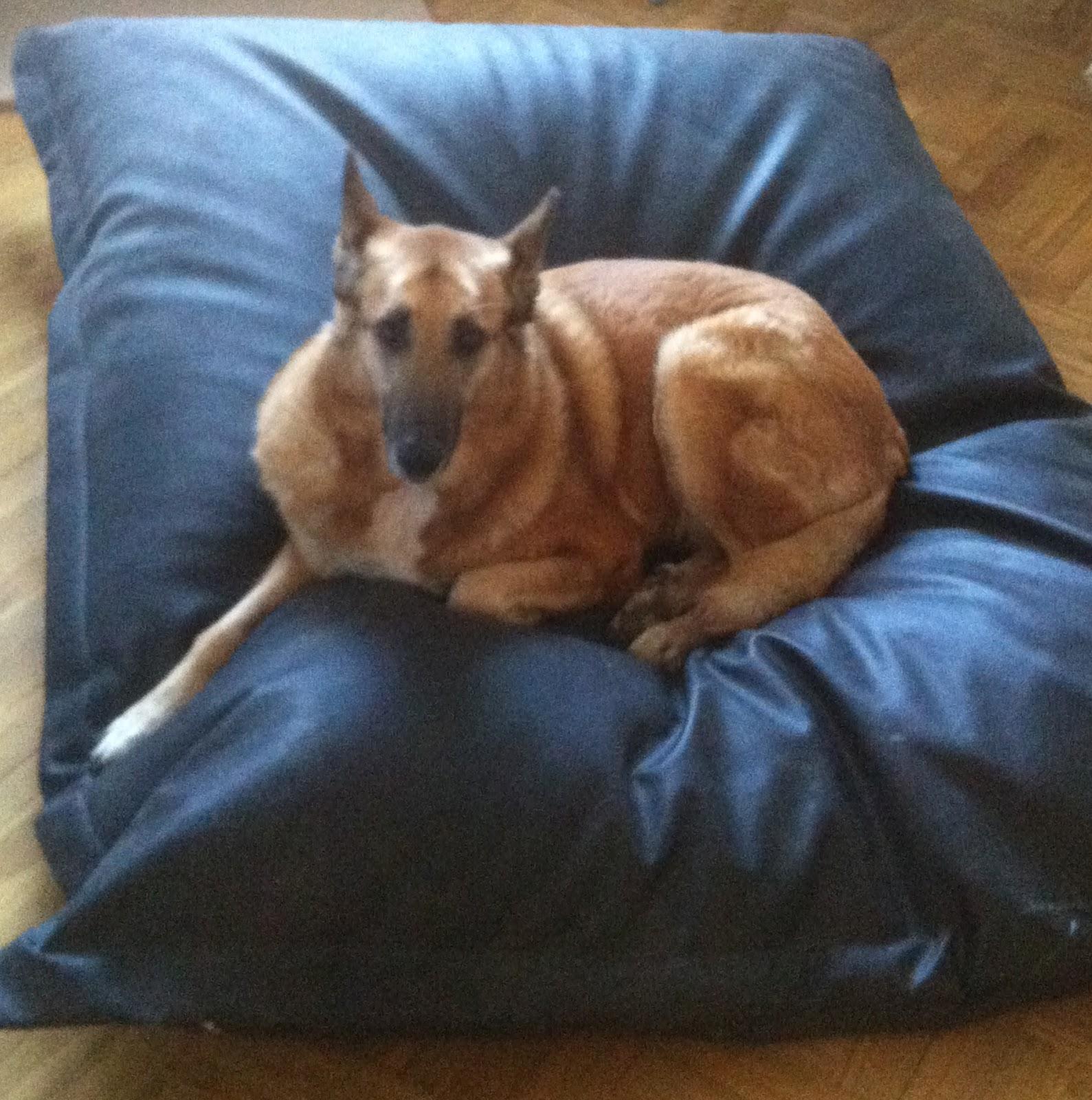Laperragorda camas para perros grandes - Camas muy grandes ...