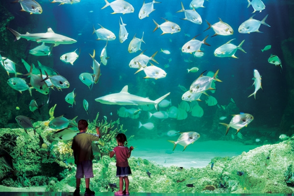 ... Visits: Sydney Aquarium One of the Greatest Aquariums in the world
