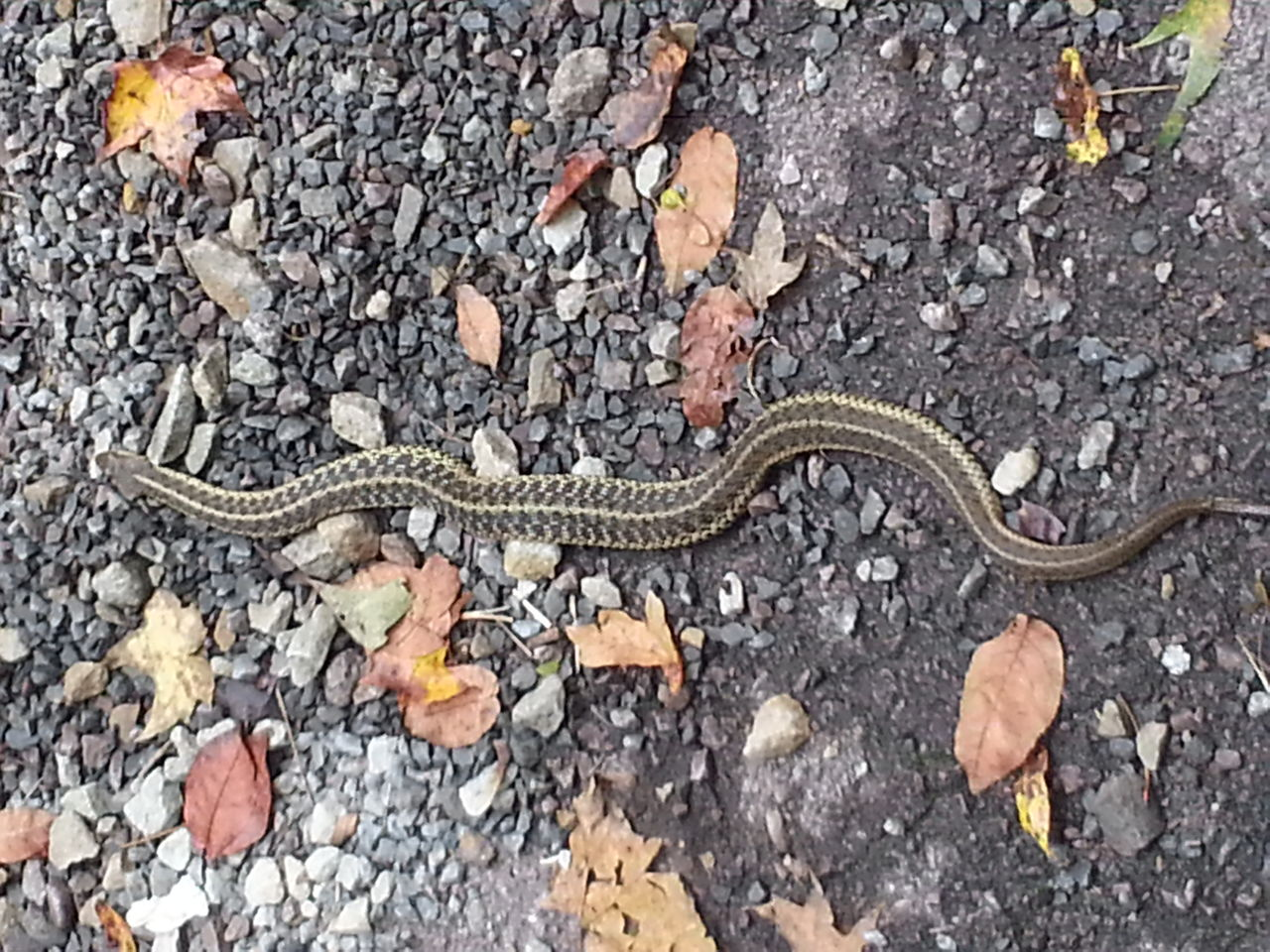 How To Identify A Baby Rattlesnake