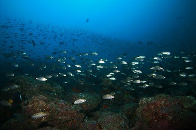 http://ec.europa.eu/fisheries/index_en.htm
