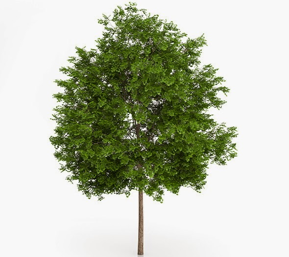 Free 3D Models of Tree