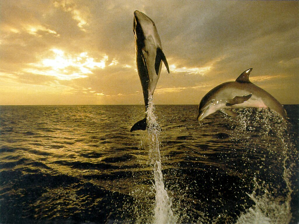 Friendly dolphins fish latest hd wallpapers 2013 for The latest wallpaper