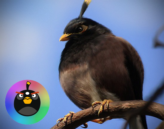 angry birds real pictures