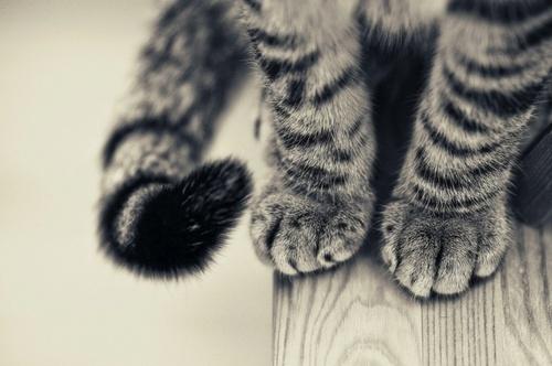 Salve Pet Imagens Para Tumblr Patinhas