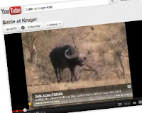 Writing Strategies using Kruger Park