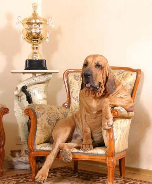 Fotos muy divertidas de perros