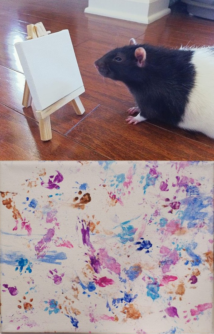 This Guinea Pig Is An Artist!