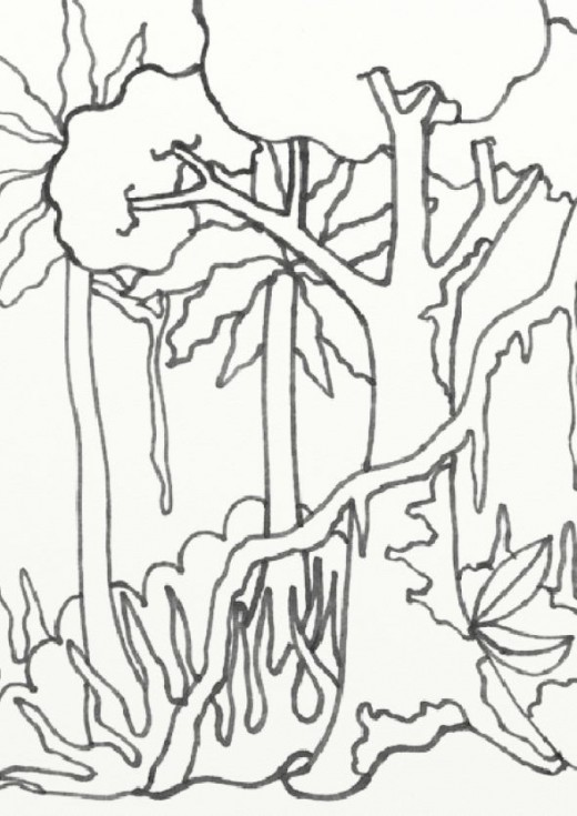 wild treasures: amazon coloring pages - Rainforest Insects Coloring Pages