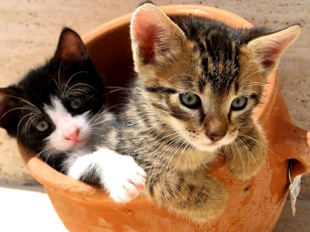 http://3.bp.blogspot.com/-0w30zE5RpZQ/Tu3s9462vHI/AAAAAAAAA58/evNGpp2rN1c/s1600/2-Cats-Crazy-Wallpapers.jpg