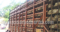 Karnataka, Chicken lorry, Seized, Adhur police, Kasaragod, Kerala, Kasargod Vartha, Malayalam news, Kerala News, International News, National News, Gulf News, Health News, Educational News, Business News, Stock news, Gold News.