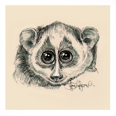 cute slow loris, slender loris, endangered species
