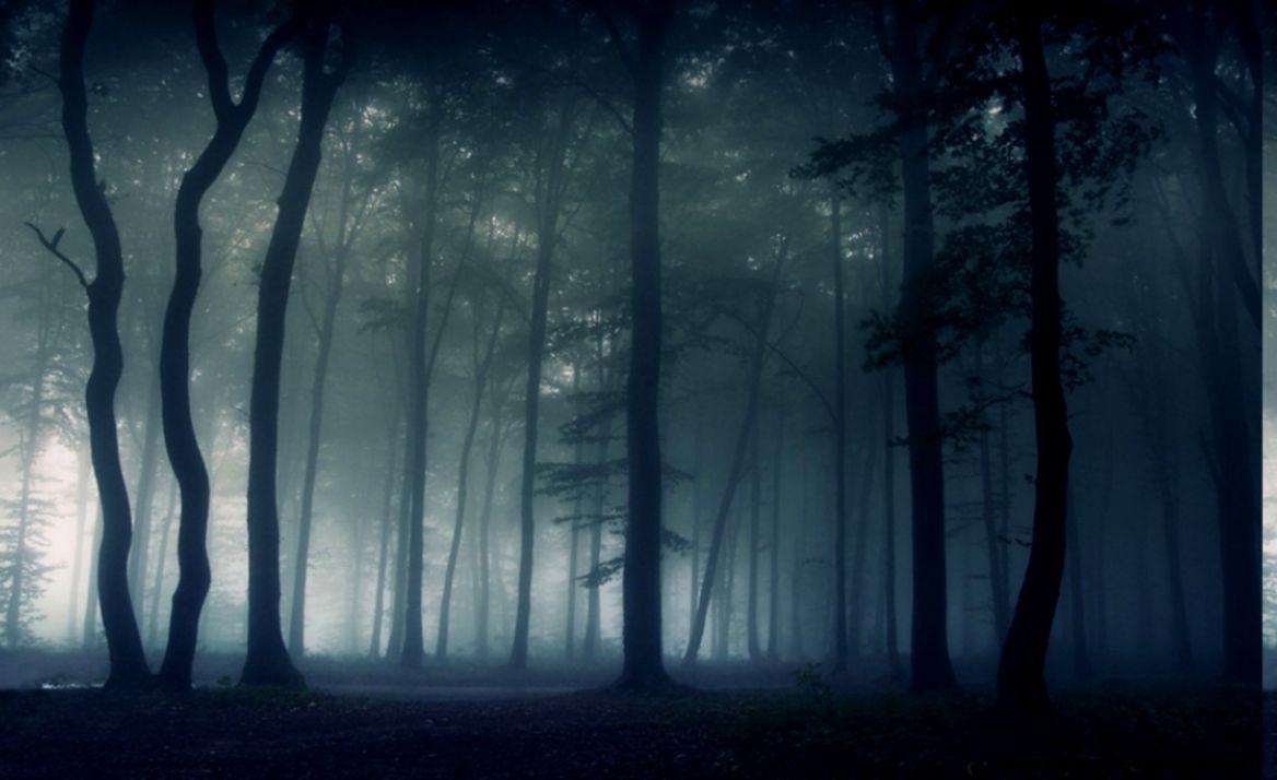 Download HD nature Landscape Mist Dark Forest Morning Trees